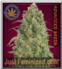 Advanced Auto Strawberry Gum 3 Feminised Seeds